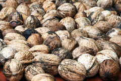 Dry walnuts Royalty Free Stock Photo
