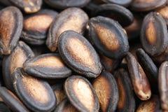 Dry Watermalon Seeds Royalty Free Stock Photos