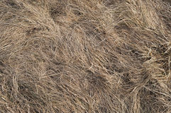 Dry Wavelike Grass Texture Stock Photo