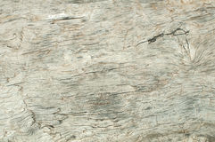Dry weathered wood surface Royalty Free Stock Images
