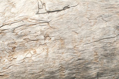 Dry weathered wood surface Royalty Free Stock Photos