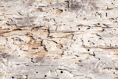 Dry weathered wood surface Stock Photography