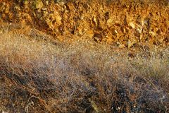 Dry Weeds on Rocky Slope. Bushy dried grass and weeds on a rural slope with many rocks in red soil, in early morning warm light Royalty Free Stock Photography