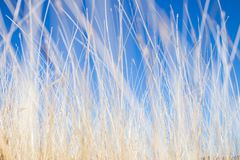 Dry Weeds royalty free stock photo