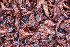 Dry wet leaves. On the floor background Royalty Free Stock Image