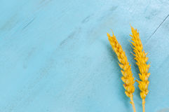 Dry wheat ears on blue background. Dry yellow wheat ears on a wooden blue background with empty space stock photo