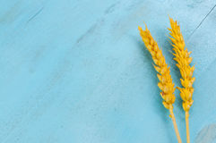 Dry wheat ears on blue background. Dry yellow wheat ears on a wooden blue background with empty space royalty free stock photos