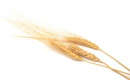 Dry wheat Royalty Free Stock Photography
