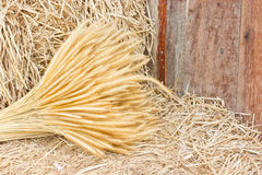 Dry Wheat On Hay. Stock Images