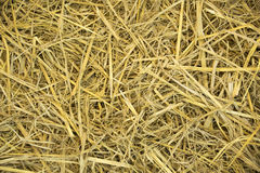 Dry Wheat Yellow Straw Texture abstract background Stock Image