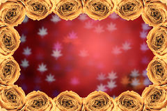 Dry white rose frame on blur maple leaves bokeh red Royalty Free Stock Photo