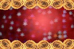 Dry white rose frame on blur maple leaves bokeh red. Beautiful dry white rose frame on blur maple leaves bokeh red background Royalty Free Stock Photography