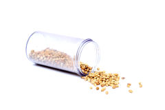Dry whole coriander seeds Royalty Free Stock Images