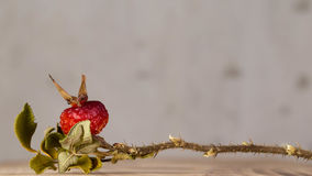 Dry wild berry. Macro photography, dry wild berry, as an element of decor Royalty Free Stock Image