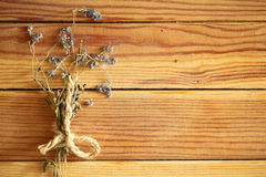 Dry wild flower on a wooden background Royalty Free Stock Photo