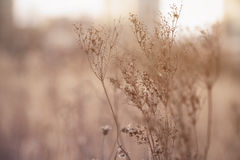 Dry wild grass on meadow in early spring Stock Photos