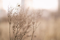 Dry wild grass on meadow in early spring Stock Image