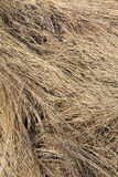 Dry Wild Grass Pattern Royalty Free Stock Photography
