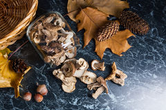 Dry wild mushrooms on black marble background. Stock Images