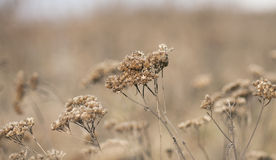 Dry winter grass. Stock Photo