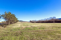 Dry Winter Rural Farm Tree Lined Grassland Royalty Free Stock Images