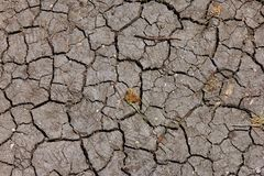 Dry withered brown cracked earh stock images