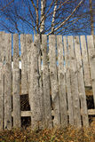 Dry withered grass at the wooden fence Royalty Free Stock Images