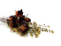 Dry withered rosebud Royalty Free Stock Images
