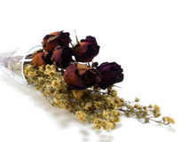 Dry withered rosebud Stock Images