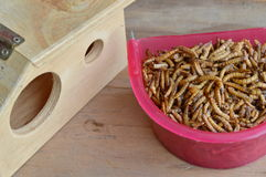 Dry worm for feeding rodent or bird with lizard and wooden house Royalty Free Stock Photos