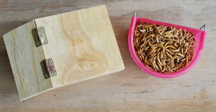 Dry worm for feeding rodent or bird with lizard and wooden house Royalty Free Stock Photo