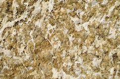 Dry yellow algae and seaweed Royalty Free Stock Photography