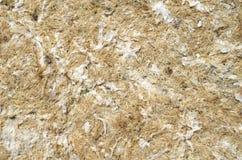 Dry yellow algae and seaweed Royalty Free Stock Image