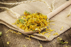 Dry yellow calendula Stock Images