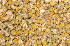dry yellow camomile tea texture for pattern Stock Images
