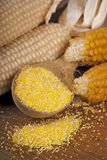 Dry yellow corn Royalty Free Stock Image