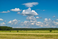 Dry yellow field and green forest Royalty Free Stock Photos