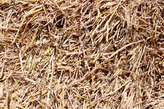 Dry yellow golden straw texture of background. Closeup a dry yellow golden straw texture of background stock photos