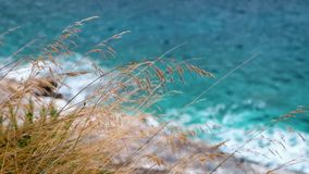 Dry yellow grass at against blue sea. Dry yellow grass at blue sea background stock video footage