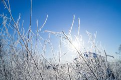 Dry yellow grass covered with hoarfrost. Frosty weather. Dry yellow grass covered with hoarfrost. Winter landscape nature in the village. Frosty weather stock photo