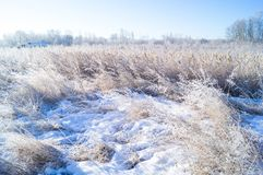Dry yellow grass covered with hoarfrost. Frosty weather. Dry yellow grass covered with hoarfrost. Winter landscape nature in the village. Frosty weather stock images