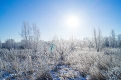 Dry yellow grass covered with hoarfrost. Frosty weather. Dry yellow grass covered with hoarfrost. Winter landscape nature in the village. Frosty weather stock photography