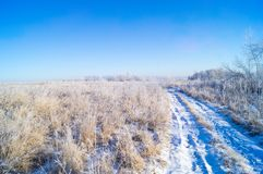 Dry yellow grass covered with hoarfrost. Frosty weather. Dry yellow grass covered with hoarfrost. Winter landscape nature in the village. Frosty weather royalty free stock photo