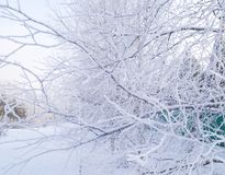 Dry yellow grass covered with hoarfrost. Frosty weather. Dry yellow grass covered with hoarfrost. Winter landscape nature in the village. Frosty weather royalty free stock photos