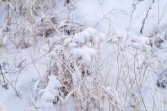 Dry yellow grass covered with hoarfrost. Frosty weather. Dry yellow grass covered with hoarfrost. Winter landscape nature in the village. Frosty weather stock image