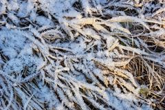 Dry yellow grass covered with ice snow crystals cold frosty background close-up. Grass covered with ice snow crystals cold frosty background close-up stock photography