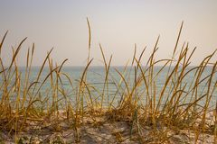 Dry yellow grass in dune against calm sea. Seaside background. Tall reed on sand beach. Seascape on sunset. royalty free stock image