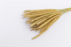 Dry yellow grass flower Stock Images