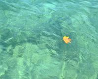 Yellow leaf floating. Dry yellow leaf floating on a blue sea water surface Royalty Free Stock Photo
