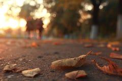 Dry yellow leaves Stock Photo
